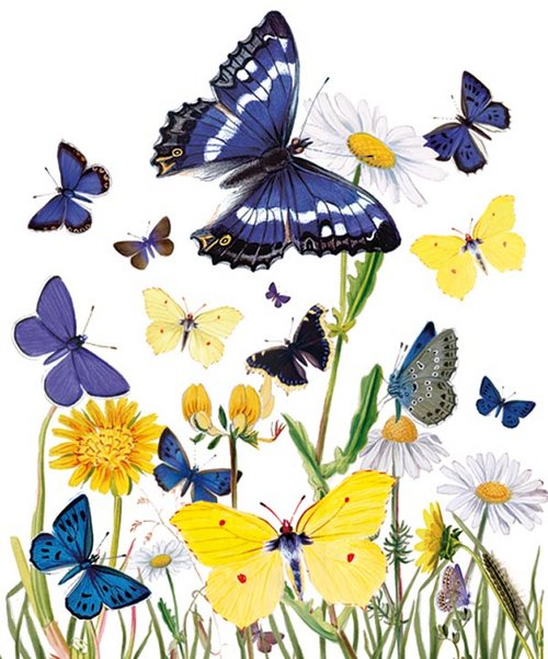 British-Butterflies1